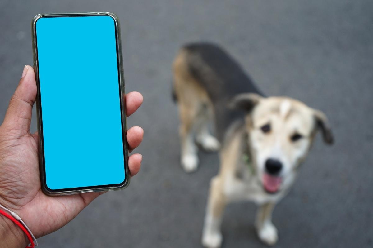 Urlaubsfotos mit Hund mit dem Handy