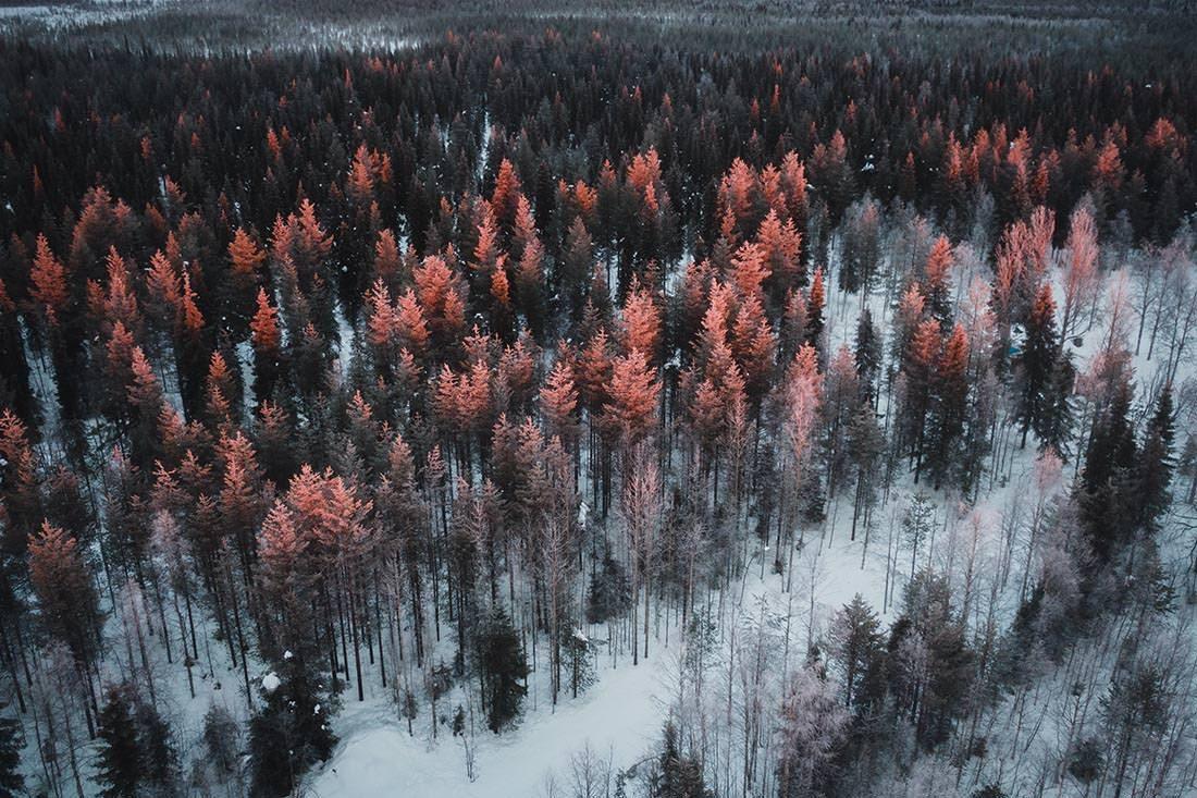 Lappland Interview